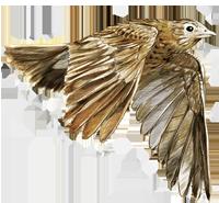 Feldlerche_Logo_200px.png