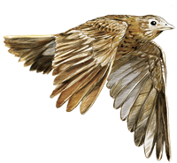 Feldlerche_Logo_200px_0.png