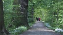 DieHartholzaue mit Bärlauch im Eichenwald. © S. Rösner