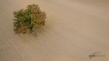 Ackerland mit Einzelbaum. © S. Rösner