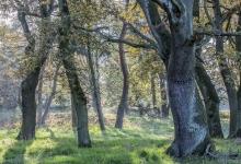Eichen- und Kiefernwäldchen. © S. Rösner